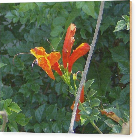 Floral 3 Wood Print by Dan Twyman