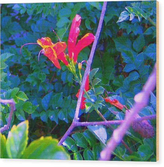 Floral 5 Wood Print by Dan Twyman