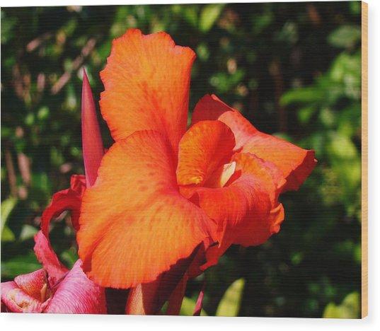 Floral Orange Wood Print by Van Ness