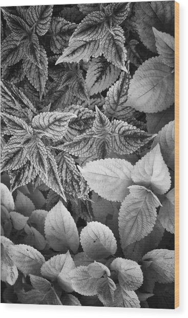 Floral Tones At Biltmore Wood Print