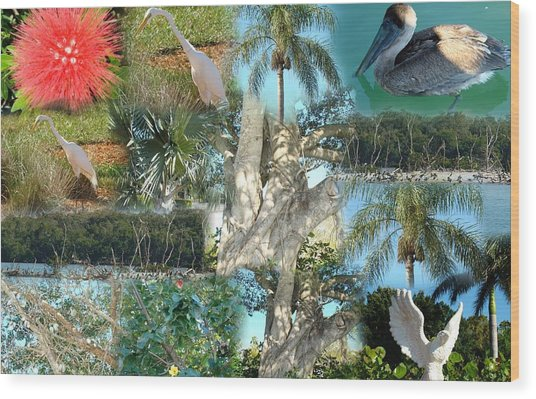 Florida Birds And Trees Wood Print