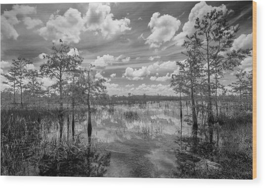Florida Everglades 5210bw Wood Print