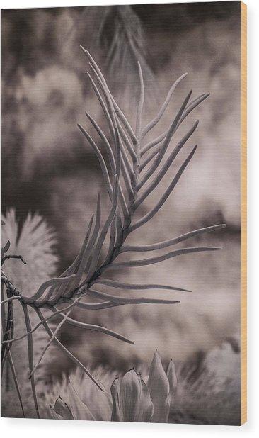 Florida Flora 1 Wood Print