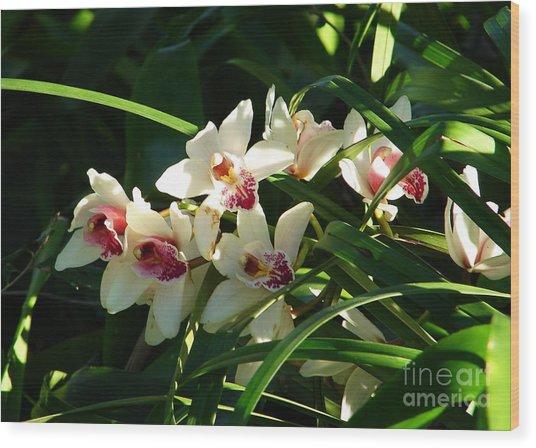 Florida Orchids Wood Print