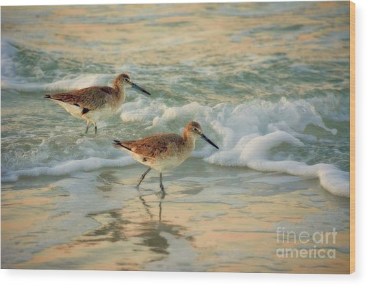 Florida Sandpiper Dawn Wood Print