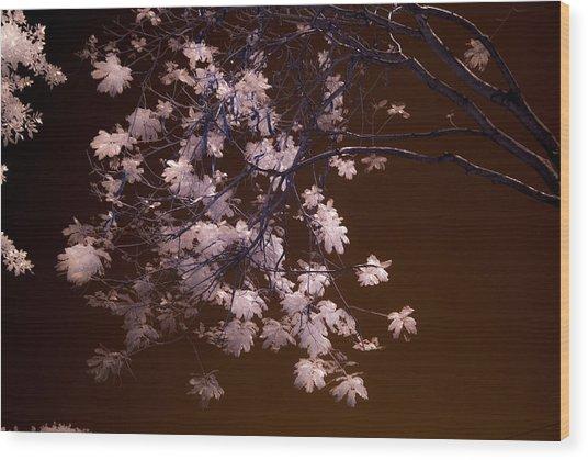 Florida Spring Wood Print