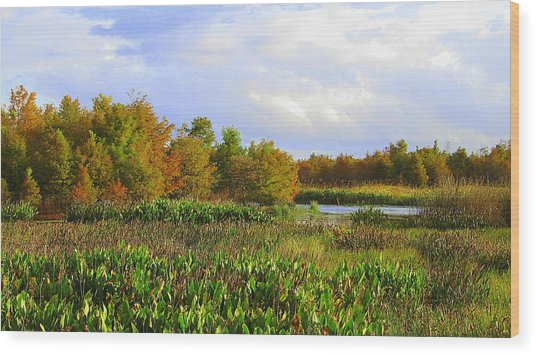 Florida Wetlands August Wood Print