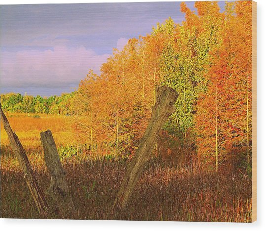 Florida Wetlands  Wood Print