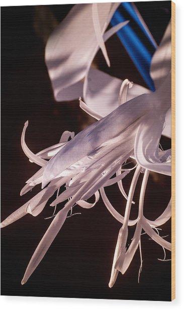 Florida Whites 2 Wood Print