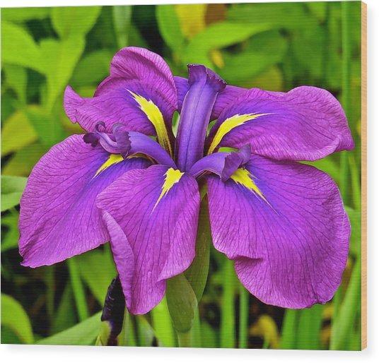 Iris 106 Wood Print by Patsy Pratt