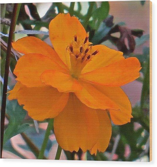 Flower 115 Wood Print by Patsy Pratt
