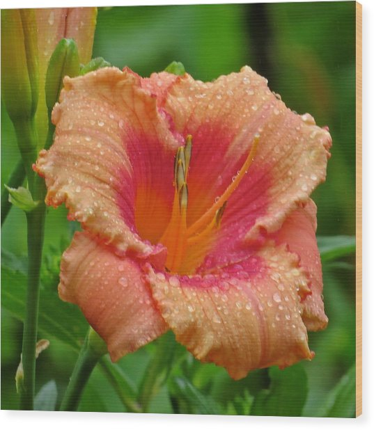 Flower 120 Wood Print by Patsy Pratt