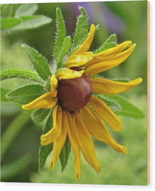 Flower 127 Wood Print by Patsy Pratt