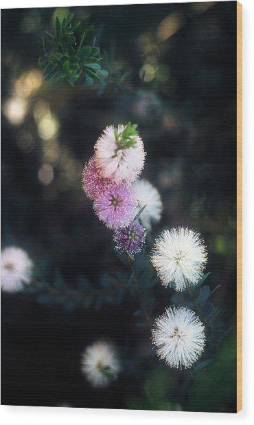 Flower 47 Wood Print
