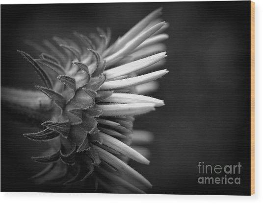 Flower 58 Wood Print