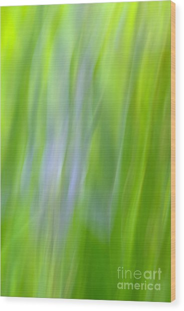 Flower Abstract Wood Print by Kelly Morvant