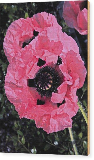 Flower Alone Wood Print