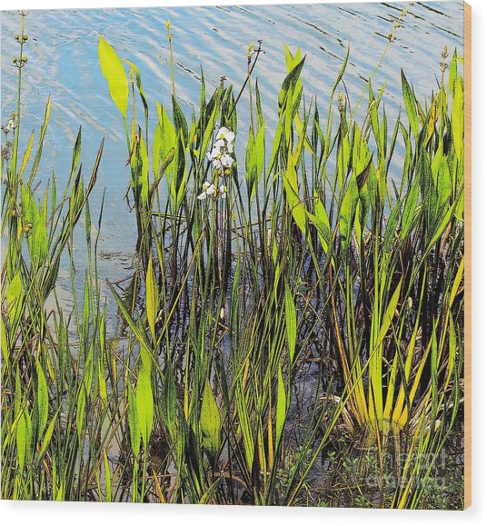 Flower And Pond Grass Wood Print