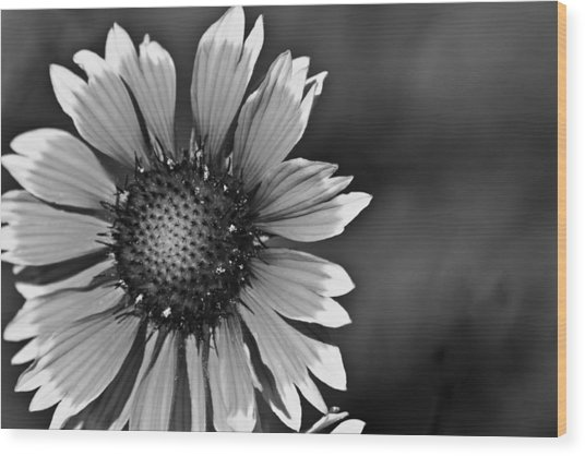 Flower Black And White #1 Wood Print