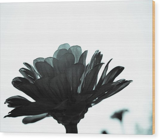 Flower Bloom Wood Print by Paige Sims