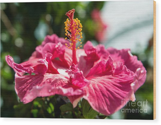 Flower Closeup Wood Print
