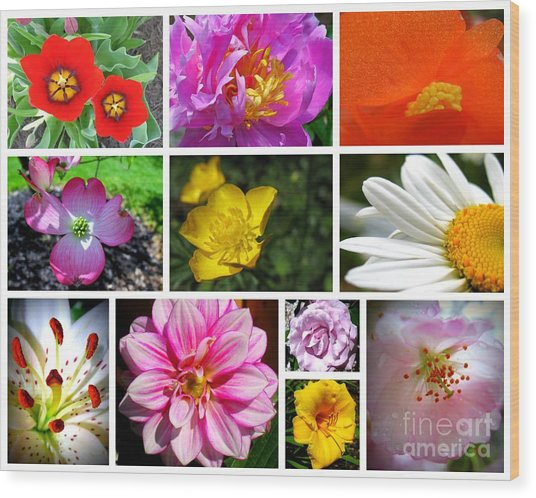 Wood Print featuring the photograph Flower Collage by Patti Whitten