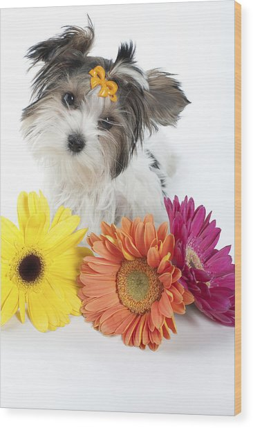 Flower Doggie Wood Print