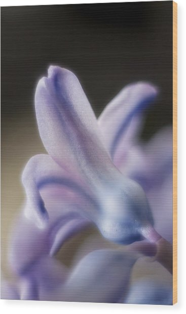 Flower Dream II Wood Print