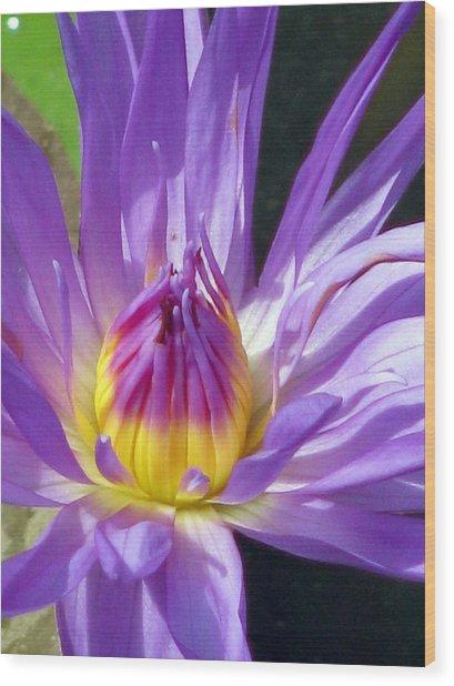 Flower Garden 70 Wood Print