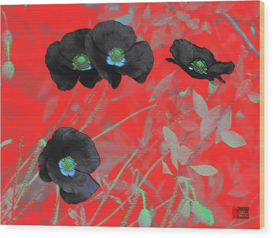 Flower Garden -  Four Black Poppies On Red Wood Print
