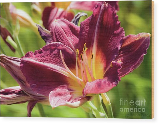 Flower IIi Wood Print