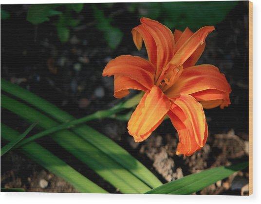 Flower In Backyard Wood Print