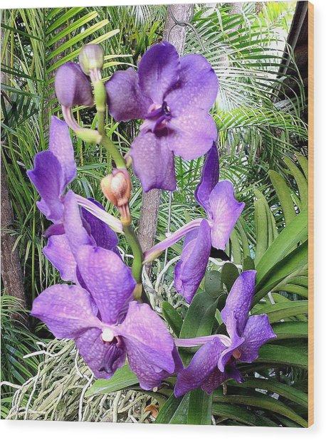 Flower In Monet's Garden France Wood Print