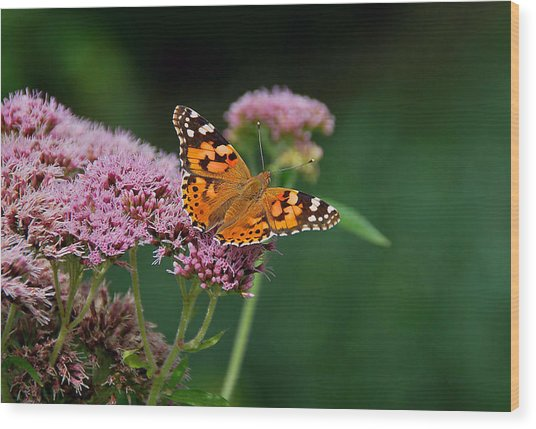 Flower Kissed By Butterfly Wood Print by Judith Russell-Tooth