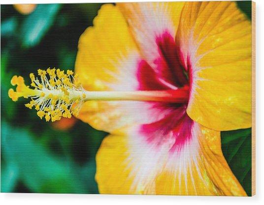 Flower Macro 2 Wood Print