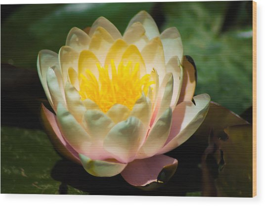 Flower On A Lily Pad Wood Print
