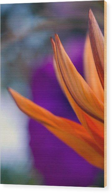 Flower On A Tabletop Wood Print by Bill LITTELL