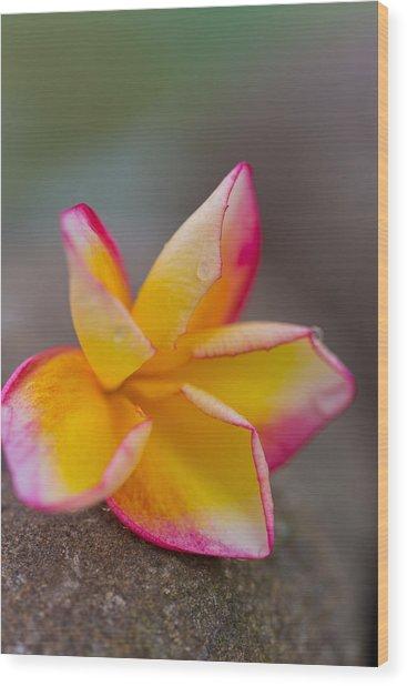 Flower Petals - Bali Wood Print