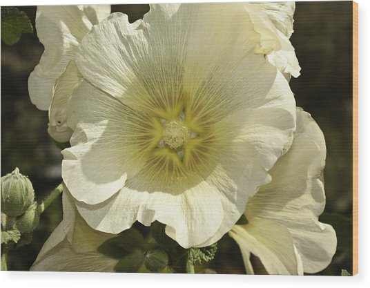 Flower Petals Of A White Flower Wood Print