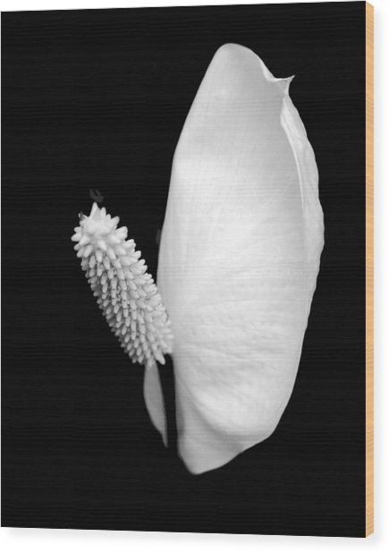 Flower Power Peace Lily Wood Print