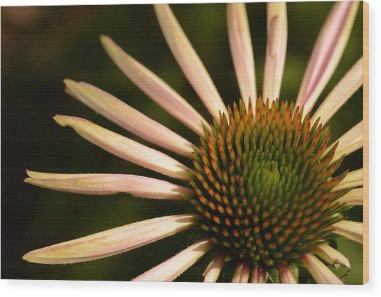 Flower Rays Wood Print