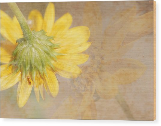 Flower Rhythm Wood Print