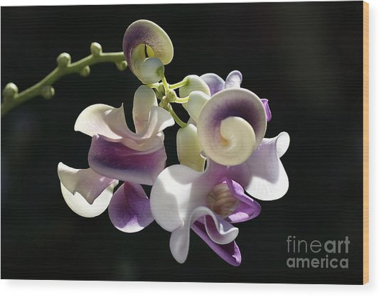 Flower-snail Flower Wood Print