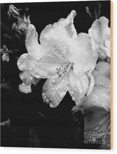 Flower With Water Drops Wood Print