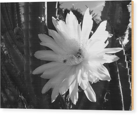 Flowering Cactus 1 Bw Wood Print