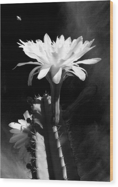 Flowering Cactus 3 Bw Wood Print