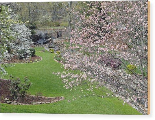 Flowering Dogwoods In Cleveland Park's Rock Quarry Falls  Wood Print