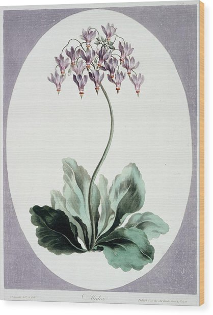 Flowering Plant Wood Print by Natural History Museum, London/science Photo Library