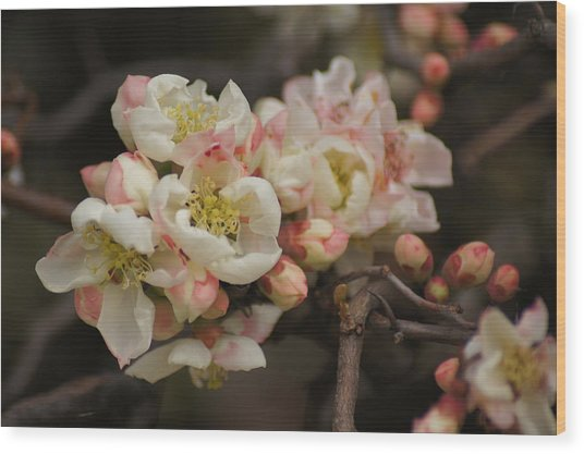 Flowering Quince Wood Print