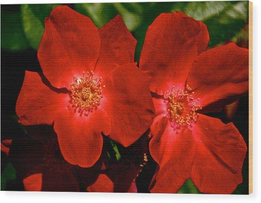 Flowering Reds Wood Print by Kathi Isserman